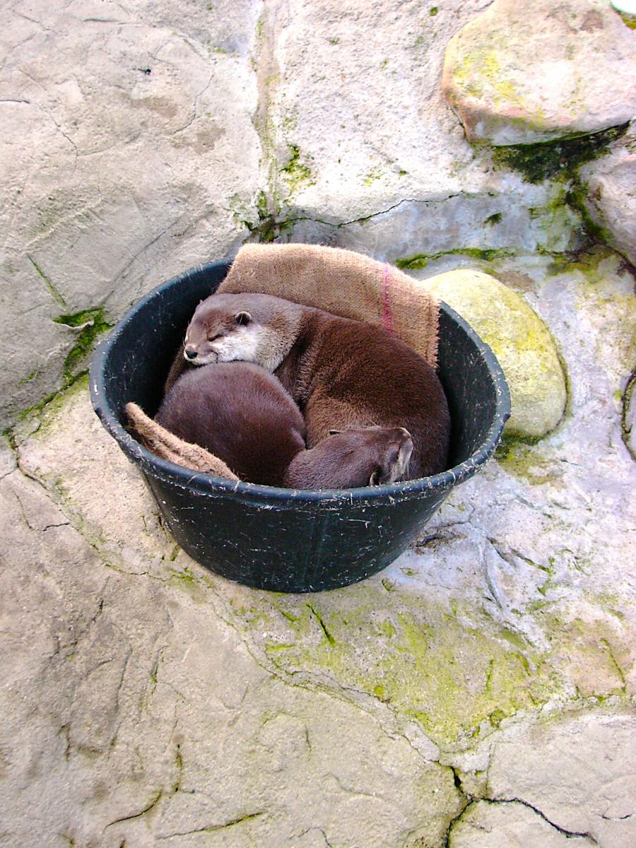 OtterimEimer